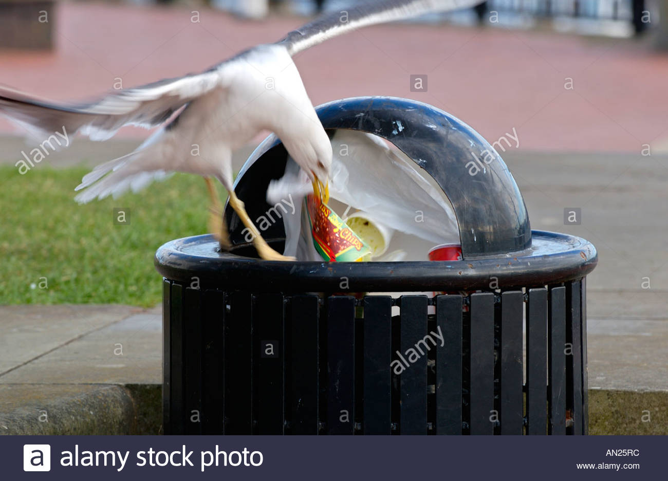 Gull About To Remove Waste Food From Litter Bin In Cardiff Bay South Disassembly Stock Photos Images Alamy An25rc